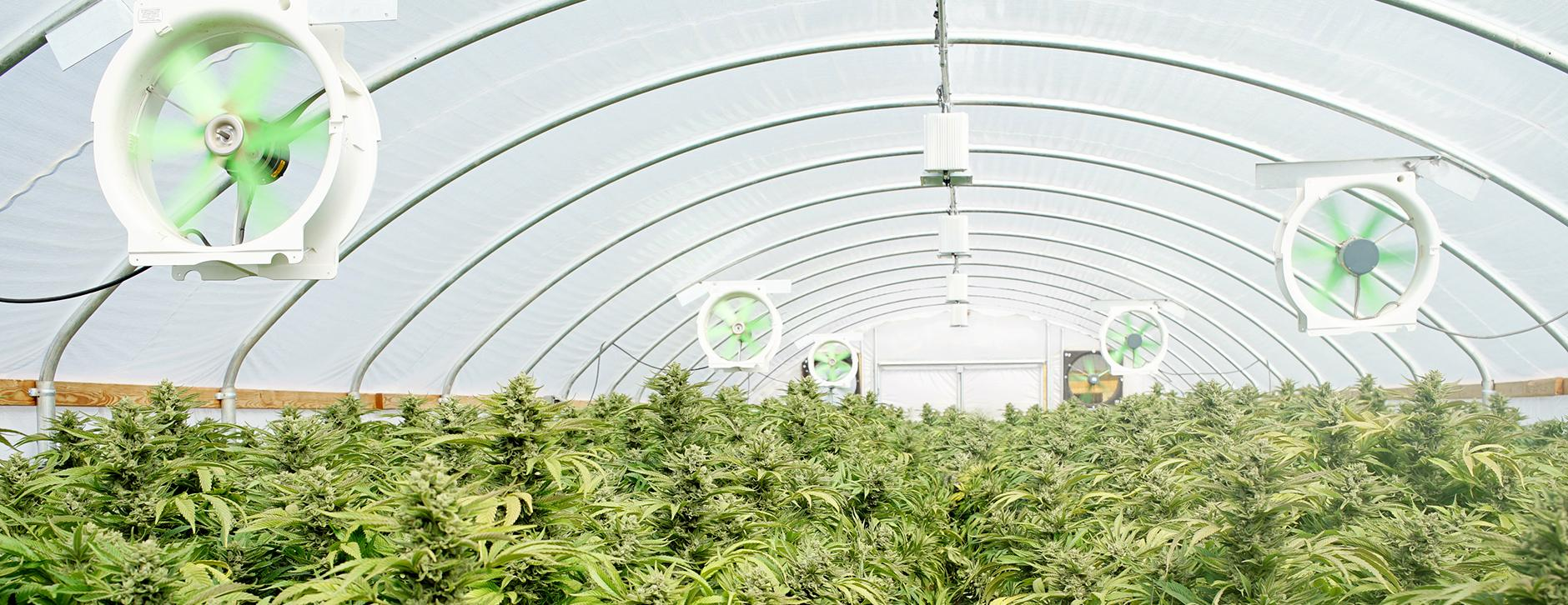cannabis greenhouse fans for circulation variable speed fans